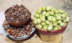 Orechy maslovníka afrického